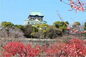 大阪梅林公園見ごろ2015