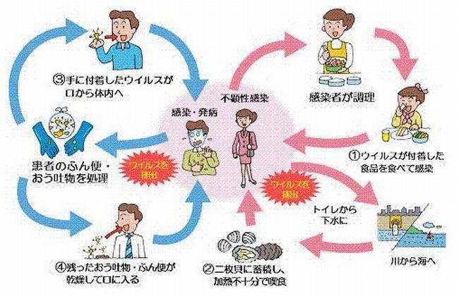 ノロウイルス新型経緯流行対策